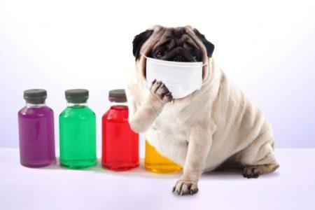 【インフルエンザ】家庭内感染を阻止!5日目